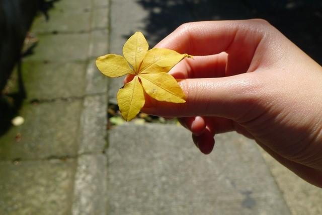 tree-leaf-1963195_640